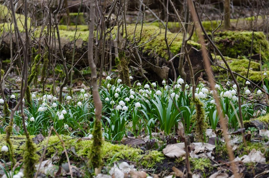 rezerwat śnieżycowy jar