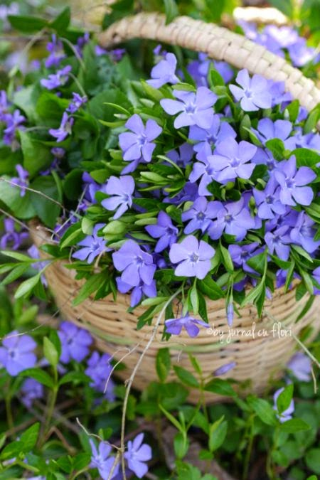 cos rustic cu flori mov toporasi sachiiu  rustic basket violet flowers