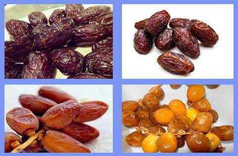 macam dan jenis buah kurma