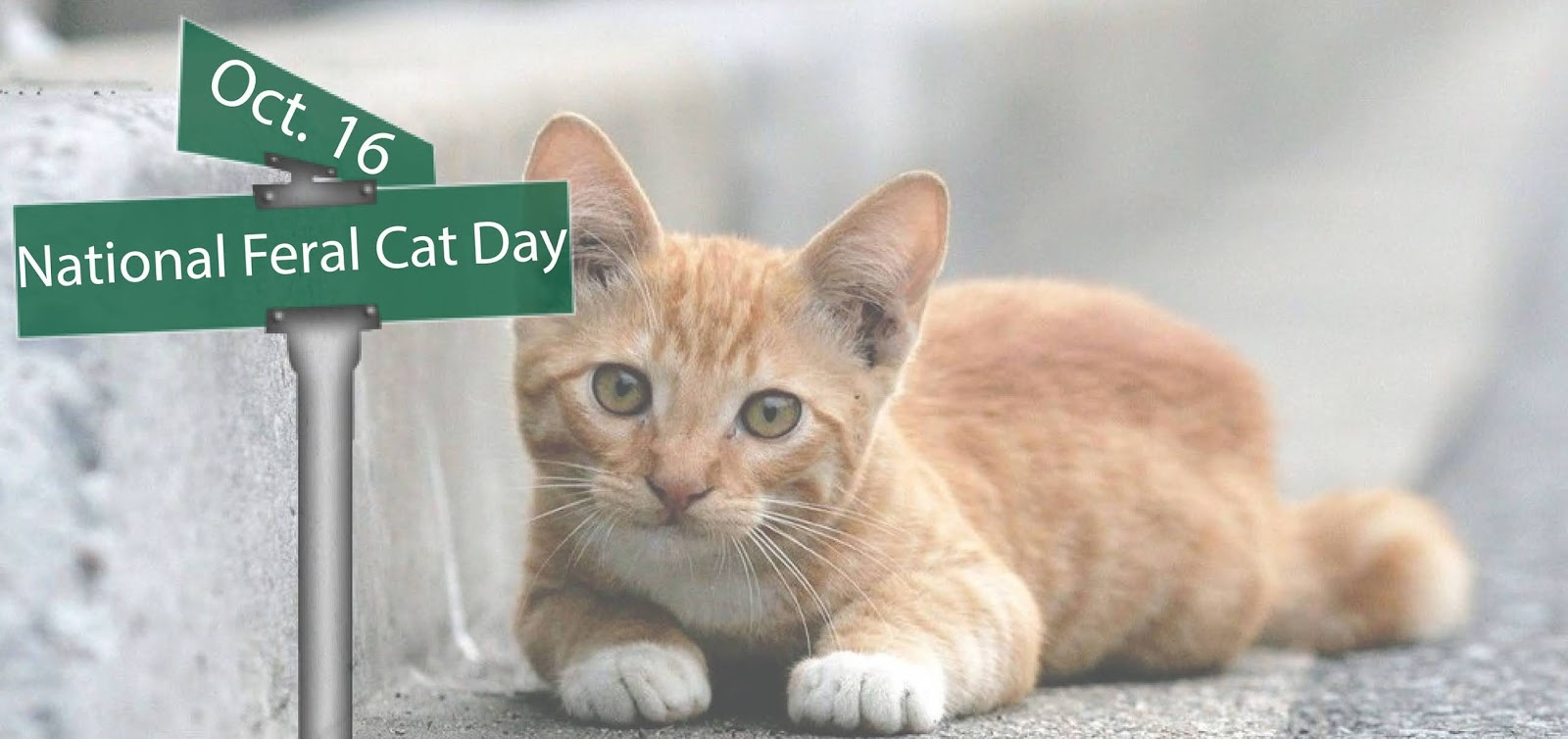 National Feral Cat Day Wishes Lovely Pics