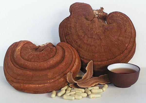 giá trị thực sự của sản phẩm nấm linh chi