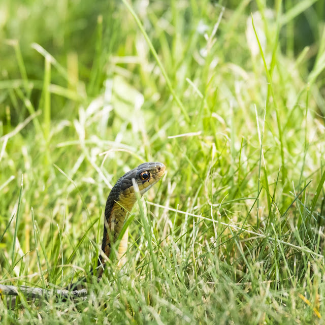 Home Remedies to Get Rid of Snakes