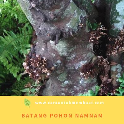 Batang Pohon Namnam