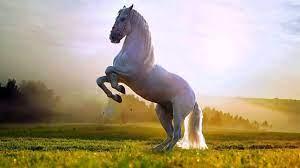 حوار بين ثور وحصان