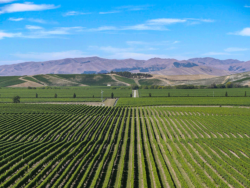 Blenheim is one of New Zealand's sunniest places.