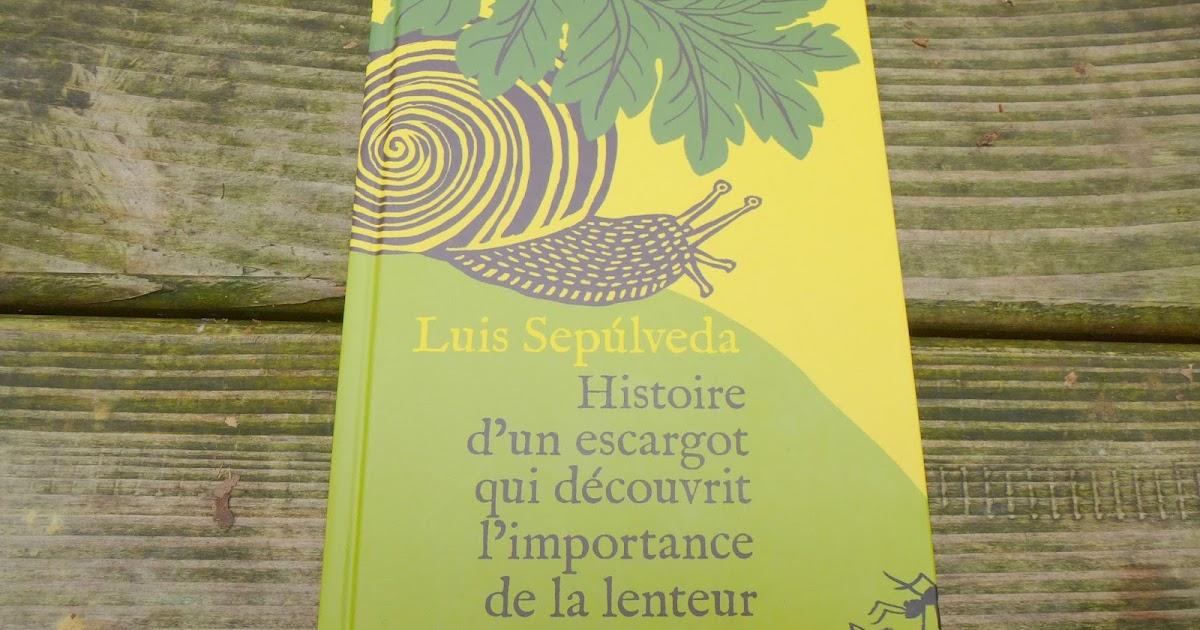 Depuis le cadre de ma fen tre histoire d 39 un escargot qui for Histoire de la fenetre