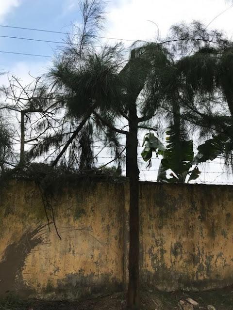 Học sinh lớp 9 bị điện giật chết khi cắt tỉa cây…theo chỉ đạo của giáo viên nhà trường