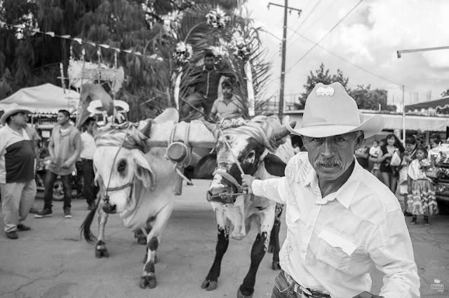 Hombre con yunta en Santa MAría del Tule Oaxaca