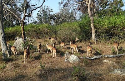 Best National Park in India, Bandhavgarh National Park, Madhya Pradesh