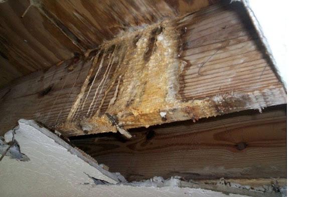 Powstawanie pleśni i grzyba na drewnie konstrukcyjnym domu czyli więźby dachowej poddasza