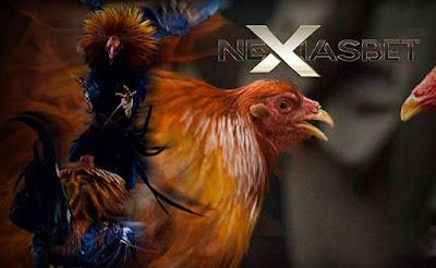 Sabung Ayam Online Arena Ayam Bangkok Super Apk - nexiasbet88.info
