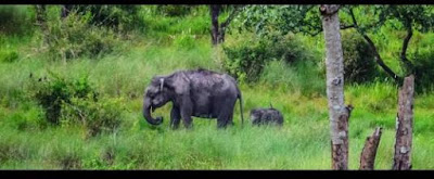 Nagarjuna_Sagar_Wildlife_Sanctuary,wildlife_sanctuary_in_andhra_pradesh