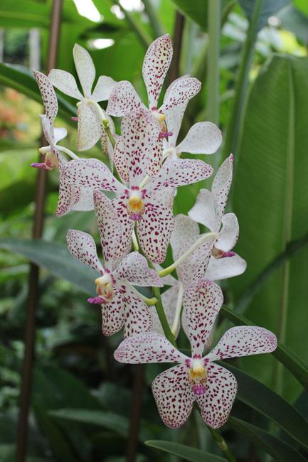Bella orquidea con pintas