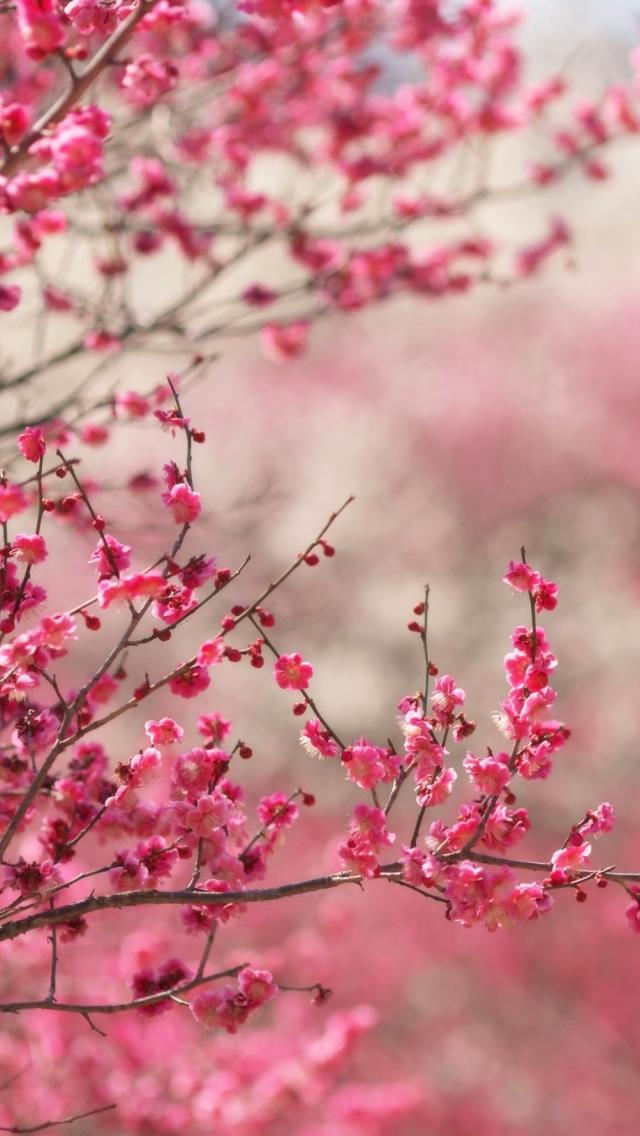 Papel de Parede para Celular Flores Rosas