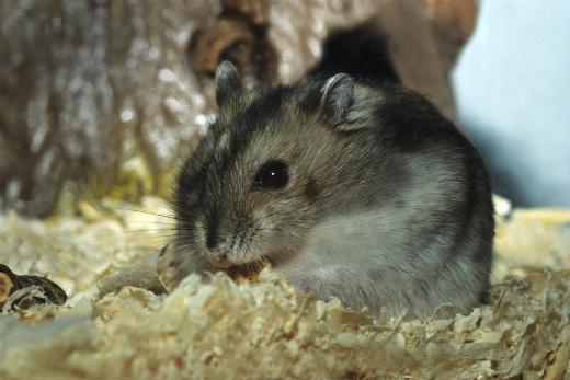 escort hof hamster sex website