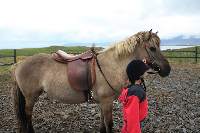 Meeting an Icelandic horse