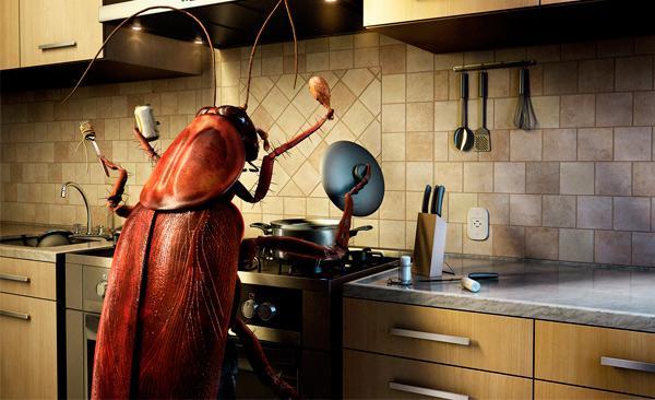 Чего боятся тараканы? Рекомендации и советы