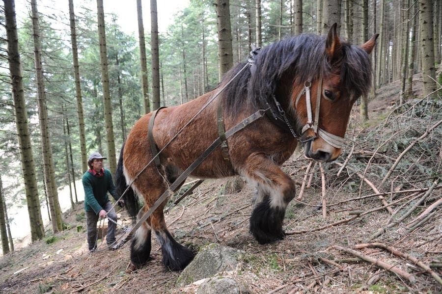 """Résultat de recherche d'images pour """"ferme survie traction cheval"""""""
