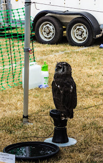 African Verreaux Milky Eagle Owl