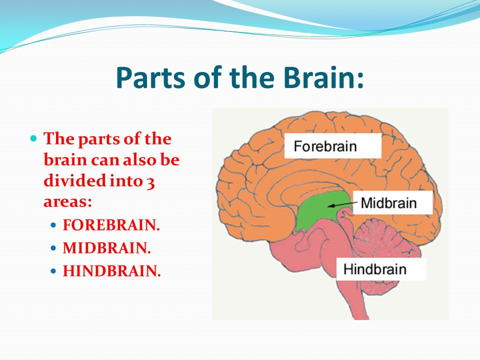 Goverment jobs and more: Forebrain Function