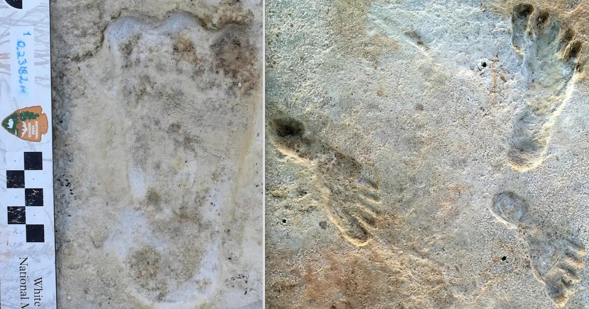 Fossil Footprints Discovery Is Earliest Known Trace Of Humans In North America