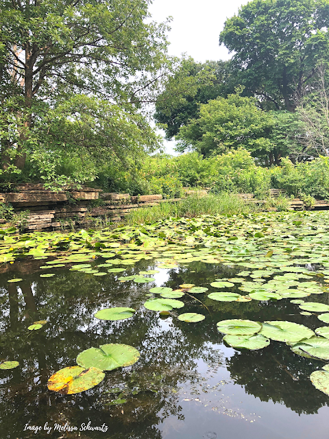 Romantic saunter around Alfred Caldwell Lily Pool.