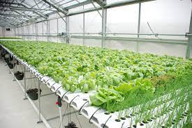 Hydroponic Farming Related | Nutrient Liquid fertilizer How much Required