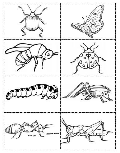Okul öncesi Havada Yaşayan Hayvanlar Boyama Gazetesujin