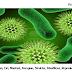 √ Bakteri : Pengertian, Ciri, Manfaat, Kerugian, Struktur, Klasifikasi, Reproduksi & Contohnya