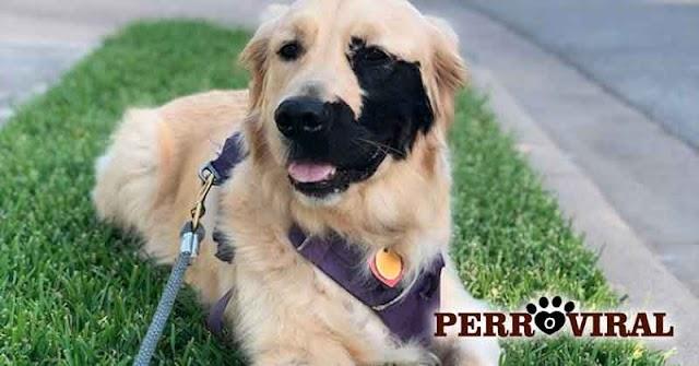 Perro nació con marca en la cara y se apodera de las Redes Sociales
