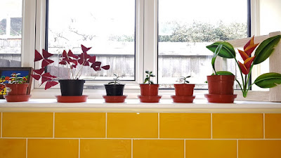 Yellow-tiled windowsill with 6 small plants