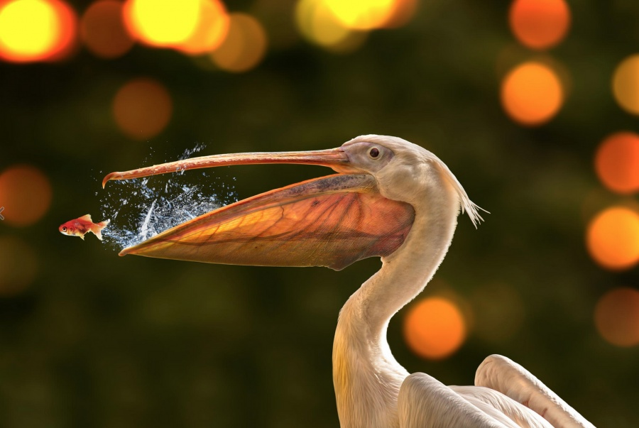 25 awesome pictures taken at the right moment
