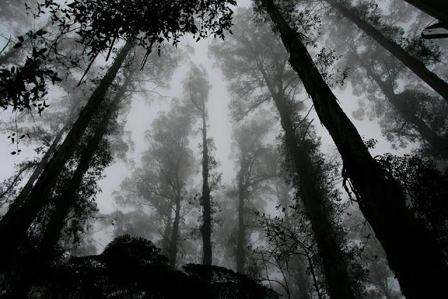 Teror Penunggu Gunung Ciremai Via Linggarjati, Kisah Nyata!