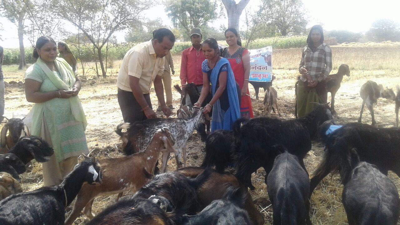 Organized-veterinary-camps-under-the-Gokul-Festival-health-care-given-to-animals-गोकुल महोत्सव के अंतर्गत ग्रामवार पशु चिकित्सा शिविरों का आयोजन कर पशुओं को दी जा रही स्वास्थ्य सेवाए