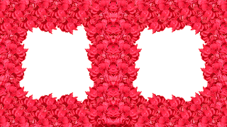 13 Moldura flor vermelha 2 fotos png