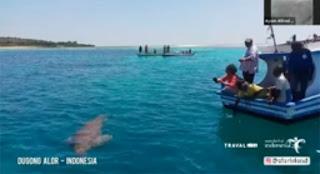 Atraksi Dugong Alor