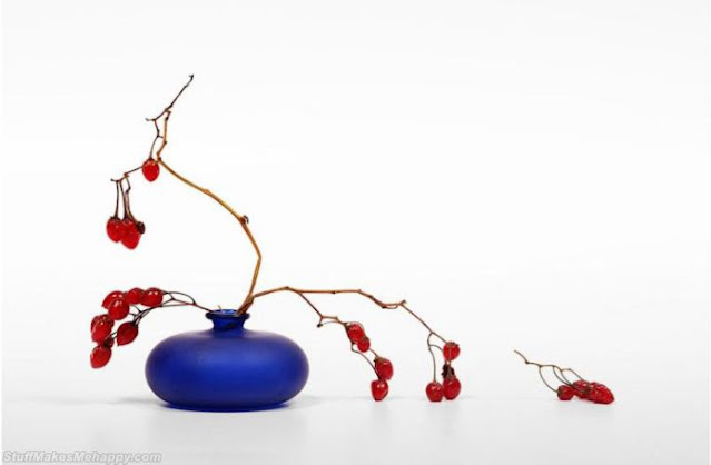 Berries on a white background. (Photo by VICTOR KANUNNIKOV)