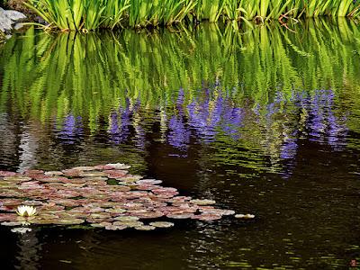 Garden pond: Kaizo-ji