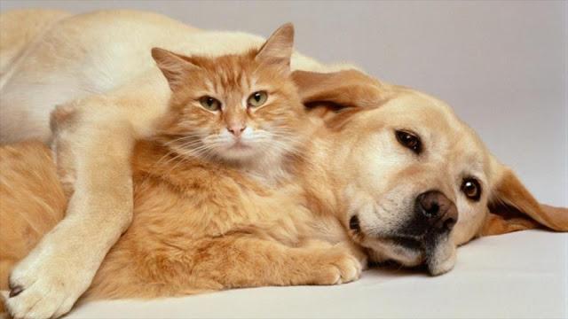 ¿Quién es más inteligente, los perros o los gatos?