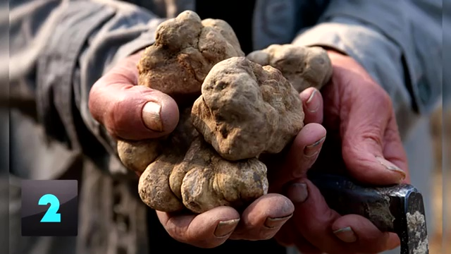 most expensive food, most expensive food in the world, most expensive food ingredients, Italian White Alba Truffle