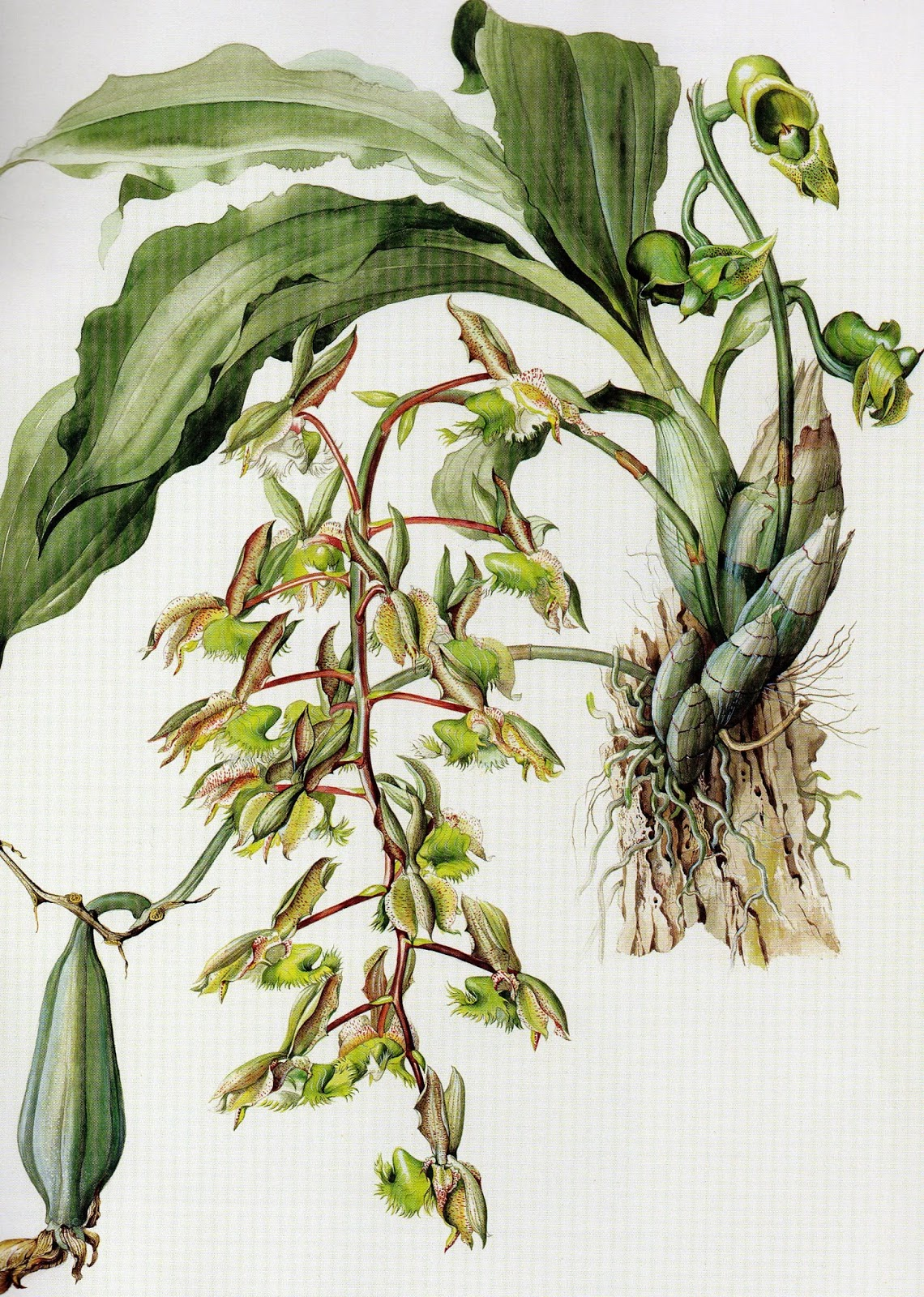 orquídeas e plantas nativas