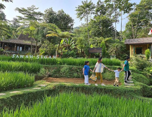 Lokasi dan Harga Menu Sawah Segar Sentul Bojong Koneng Bogor