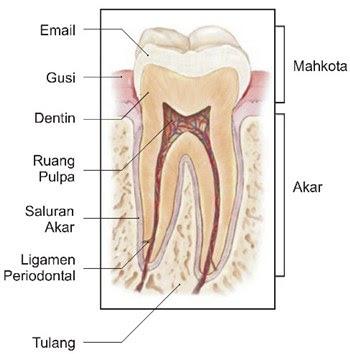 Obat Herbal yang Mampu Menyembuhkan Sakit Gigi Berlubang Super Green Plus SG Obat Sakit Gigi Herbal Paling Ampuh