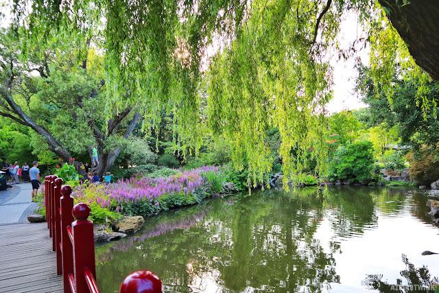 Diergaarde Blijdorp Rotterdam zoo pond trees bridge