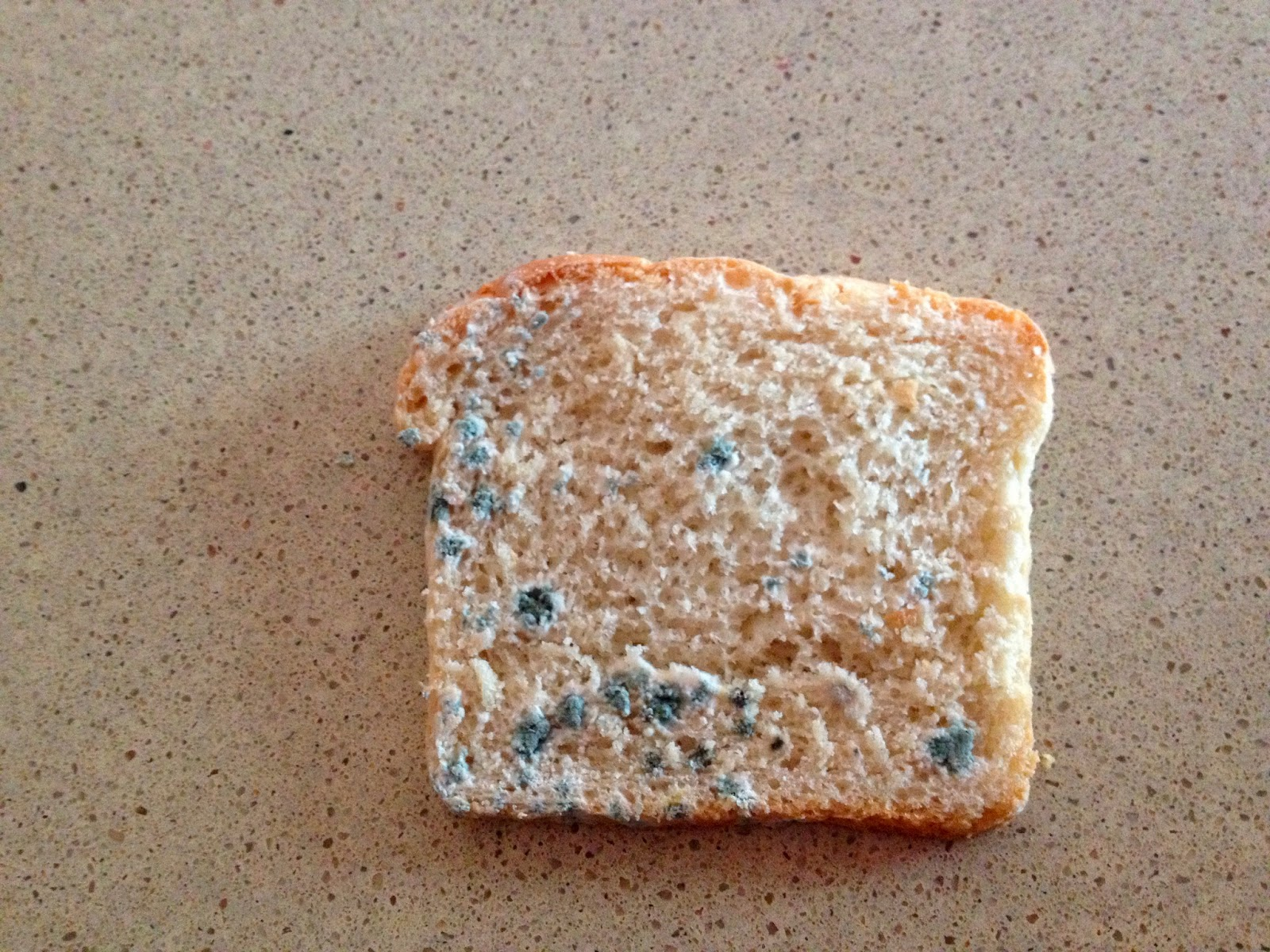 Moldy Bread Pictures 66