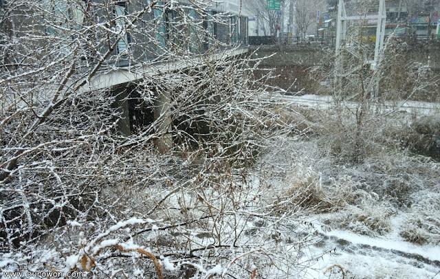 Arroyo Cheonggyecheon de Seúl con nieve