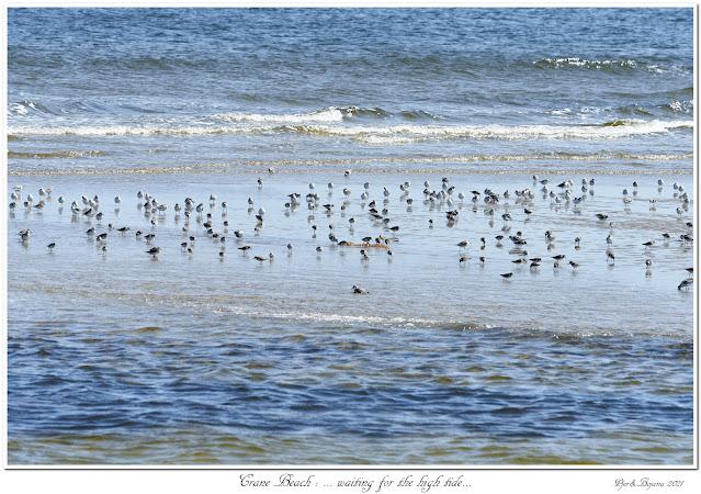 Crane Beach: ... waiting for the high tide...