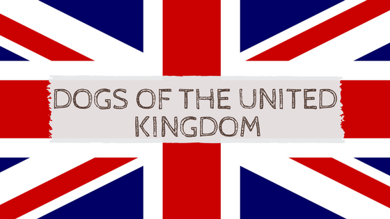 United Kingdom dogs