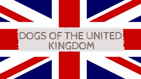 Image result for United Kingdom dogs
