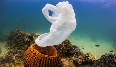 Rifiuti plastica causano mallatie barriere coralline